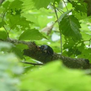 7月末のヒメオオ 偶然的ヒメオオより必然的ヒメオオ