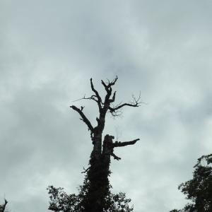 9月のヒメオオ 1/2 嵐の中で輝くのは危険