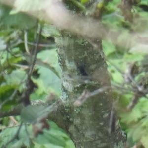 9月中旬のヒメオオ 5/5 家に辿り着くまでがヒメオオ採集