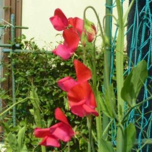 花は季節を忘れずに
