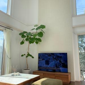 大型テレビと炊飯器購入で模様替え