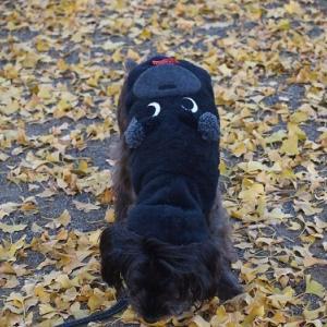 秋が おわるね