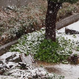 なごり雪の日曜日