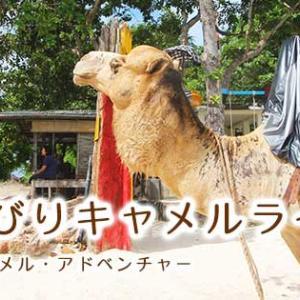 ジンバランビーチでキャメルライド体験記