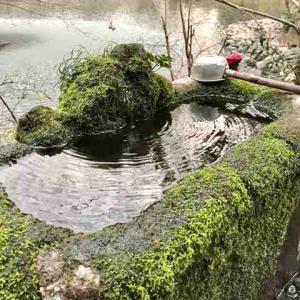 久我山〜井の頭池へ