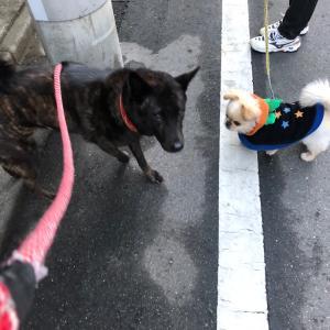朝散歩はメイ母とだよ(ᵔᴥᵔ)