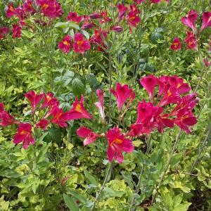 桑野木山荘からの花便り