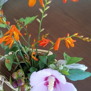花を摘んで食卓を飾る