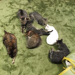 猫団子の3秒前くらい?