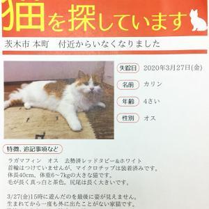 迷子猫、情報提供よろしくお願いします。