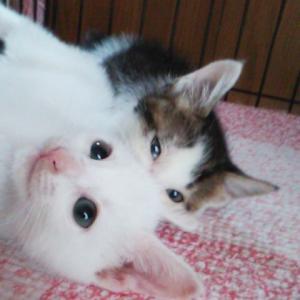 明日は子猫ちゃんのお見合いがあります。
