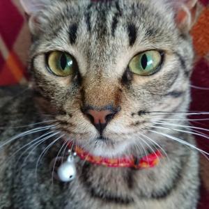 野良猫の子猫の引取りは有料です。