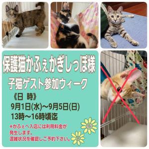 おめでとう!卒業日決定!と、明日は子猫ゲストさんいっぱい!