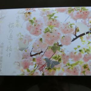 「令和3年桜の通り抜け貨幣セット」が届きました