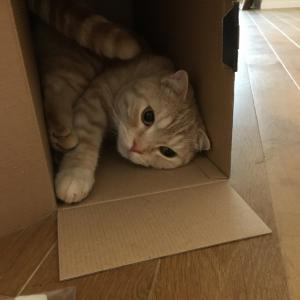 """""""箱と見れば・・・"""""""