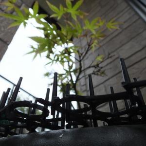 令和カメテク向上倶楽部#11『春をローアングルで』