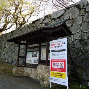桜散歩は舞鶴公園