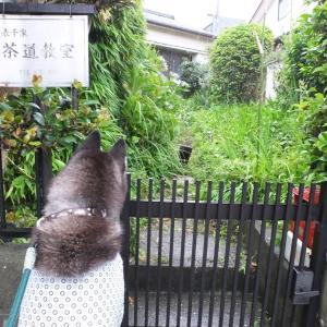 雨の合間を縫って散歩