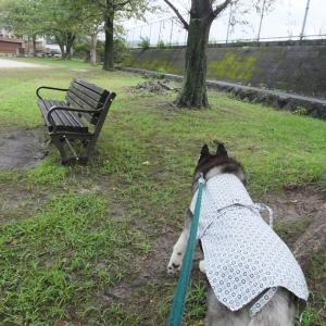 雨の合間の散歩ソラ任せ