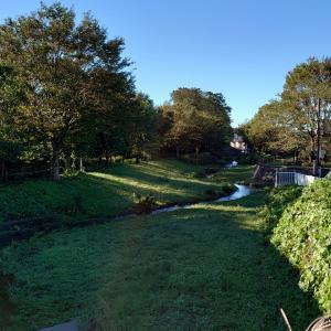 今朝の散歩は水辺のコース