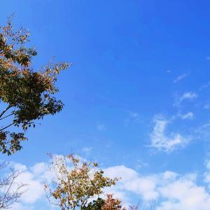 秋らしく^^