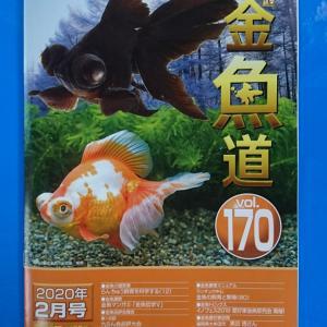 月刊金魚道最新号入荷