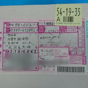 しつこく夏には買ってね❗&桜錦リクエストピックアップ動画
