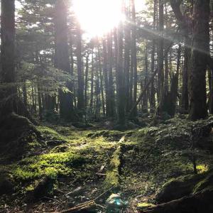 軽井沢・八千穂の旅 6〜苔の森を急ぎ足で散策
