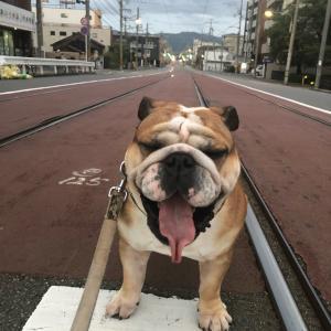 9月19日の朝散歩