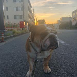 9月20日の朝散歩
