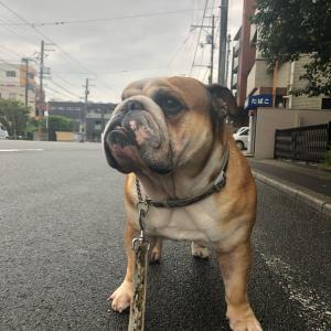 9月21日の朝散歩