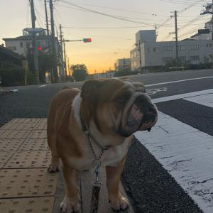 9月25日の朝散歩