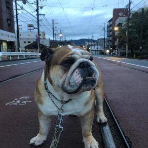 10月19日の朝散歩