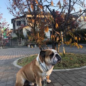 11月16日の朝散歩は近くの公園まて