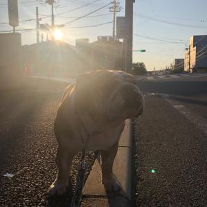 5月29日の朝散歩は朝陽が眩しい