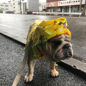 6月13日の朝散歩は雨でした☔️