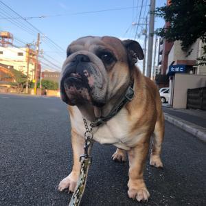 6月24日の朝散歩とルンバくん大活躍