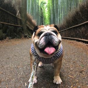 7月5日は竹林の道で朝散歩