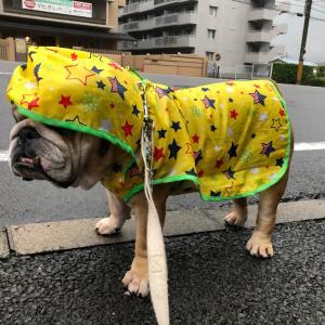 7月14日の朝散歩は雨