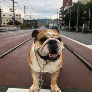 7月18日の朝散歩