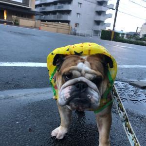 7月30日の朝散歩は雨