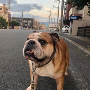 9月4日の朝散歩はまん丸のお月様
