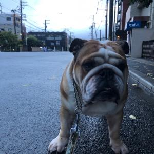 9月7日の台風通過後の朝散歩