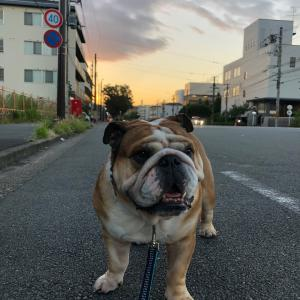 9月8日の朝散歩とペットボトルでご満悦