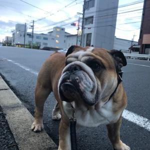 9月10日の朝散歩