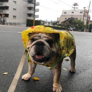 9月13日の朝散歩は雨でした