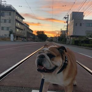 9月14日の朝散歩は綺麗な朝焼けが見れました