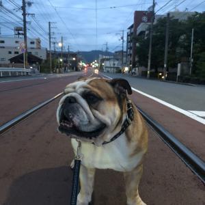 9月16日の朝散歩