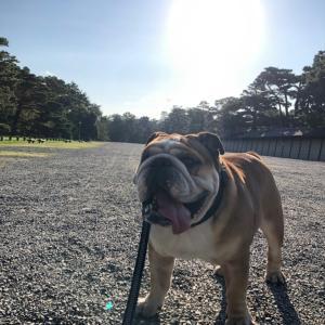 9月21日は京都御所でのんびりお散歩