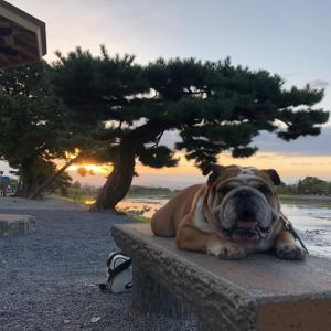 嵐山で日の出を見ながらの朝散歩